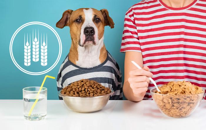Les Dietes Sans Grains Un Danger Reseau Veterinaire Acces Vet